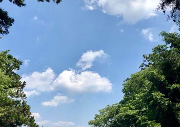 高尾山5月ごろの風景