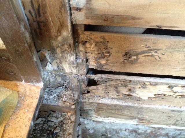 シロアリはコンクリートもゴムも餌にします